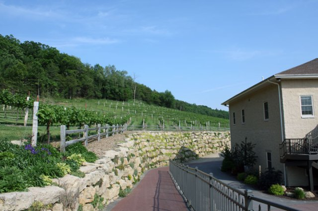 Wollersheim vineyard