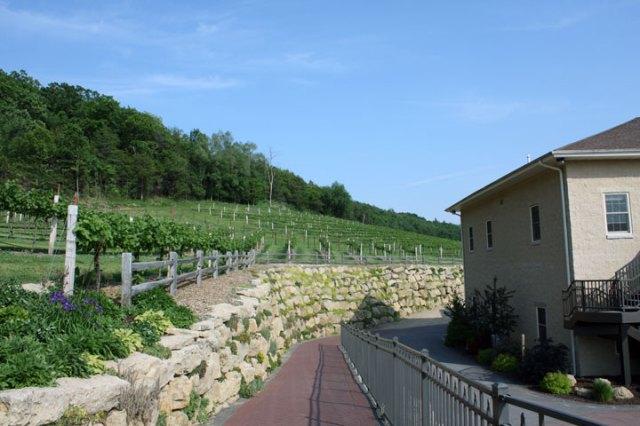 Wollersheim vineyard